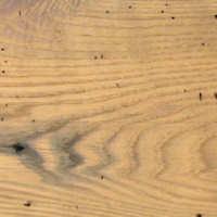 Chestnut, Wormy Image