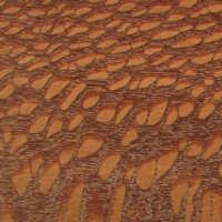 Leopardwood, Brazilian Image