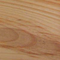 Spruce, Sitka Image